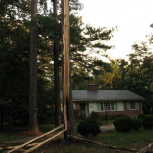 Tree destroyed by lightning strike in Sept 2011